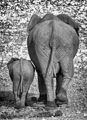 Bumming-Around-With-Mum