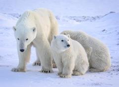 Family-Huddle